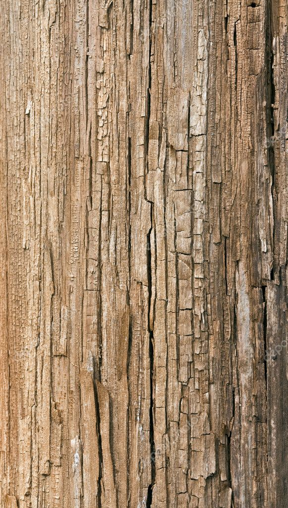 Natural wooden texture of section of an old tree — Stock Photo #1429418