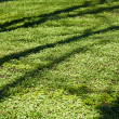 Tree shade on grass — Stock Photo #1448129