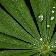 Water droplets on a fresh green leaf — ストック写真