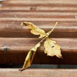 Yellow leaf on a bench — Stock Photo #1448274