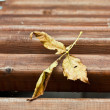 Yellow leaf on a bench — Stock Photo