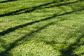 Tree shade on the grass — Stock Photo