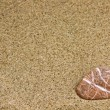 Stock Photo: Sand and sestone