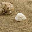 Stock Photo: Sand and seshell