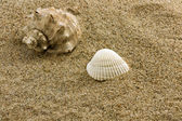 Sand and sea shell — Stock Photo