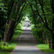 Shady pathway in a park — Stock Photo