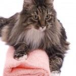 kočka s froté ručníky — Stock fotografie