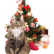 Cat by Christmas tree. Year of tiger — Zdjęcie stockowe #1422079