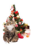 Cat by Christmas tree. Year of tiger — Zdjęcie stockowe