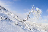 Winter landscape with snowy tree — Stock Photo