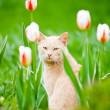 Funny cat sitting in the tulips field - Stock Photo