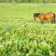 Rural landscape with horse — Stock Photo