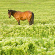 Green field with horse — Stockfoto