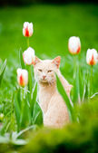 Funny cat sitting in the tulips field — Stock Photo