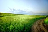 Сельский пейзаж с дорогой — Стоковое фото