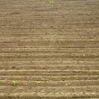 Stock Photo: Soil texture