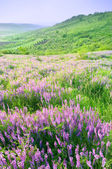 Beautiful landscape with violet flowers — Stock Photo