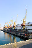 Cranes in the port — Stock Photo