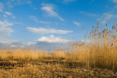 Beautiful landscape with reeds — Stock Photo