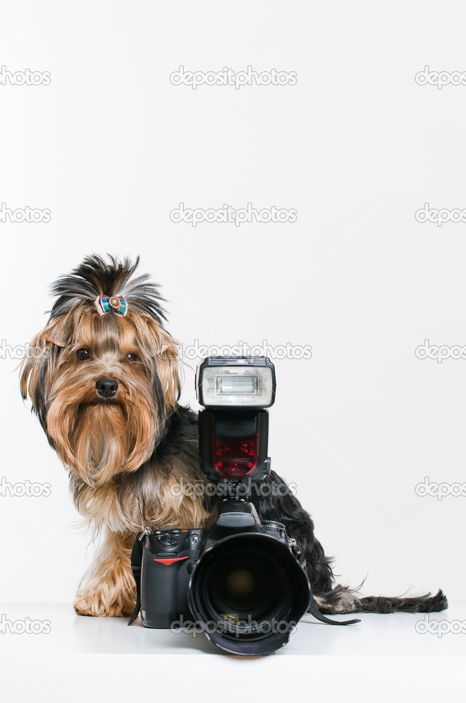 Funny little dog with digital camera, studio shot over white background   Stock Photo #2054362