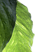 Abstract leaf — Stock Photo