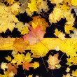 Maple leaves — Stock Photo #1159168