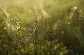 Web — Stok fotoğraf