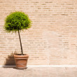 Tree in a flowerpot — Stock Photo