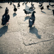 Pigeons in a city - Stock Photo