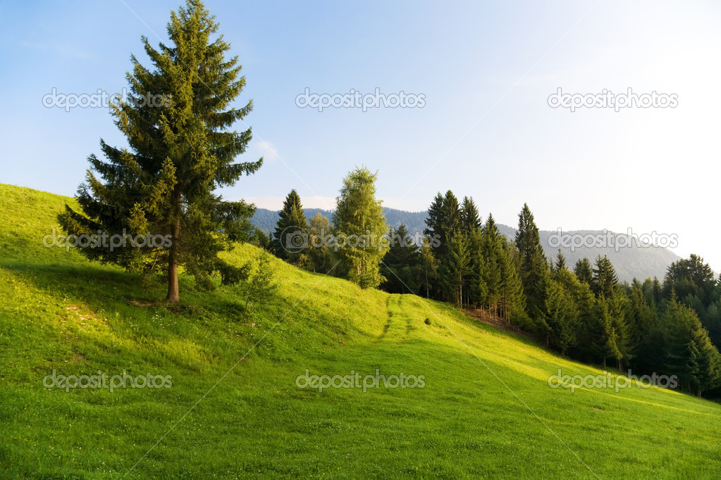 Alps morning landscape. On a hill.  Stock Photo #1194867