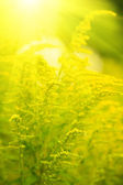 Small yellow flower with sun rays — Stock Photo