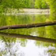 Tree over the river — Stock Photo