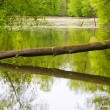 Stock Photo: Tree over the river