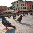 Pigeons in a city — Stock Photo