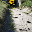 Lonely flower — Stock Photo #1369007