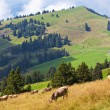 Stock Photo: Alps landscape