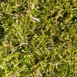 Green grass on a ground - Stock Photo
