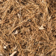 Needles on a ground organic texture - 图库照片