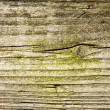 Old wood with green moss texture — Stock Photo