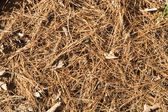 Needles on a ground organic texture — Stock Photo