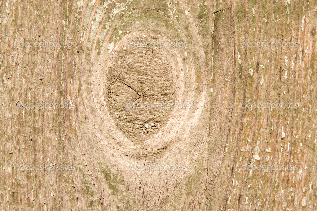 Wood with bough. As texture or background. — Stock Photo #1634921