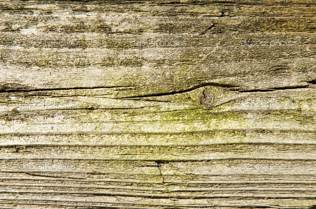 Old wood with green moss texture.  Stock Photo #1635006