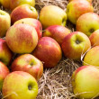 Apples on hay - Foto Stock