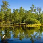 Small wood and lake — Stock Photo #1652200
