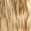Womblond and goldish hair — Stock Photo #1652249
