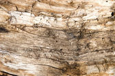 Old rotten wood — Stock Photo