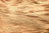 Abstract fibrous texture — Stock Photo