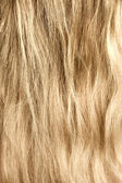 Woman blond and goldish hair — Stock Photo