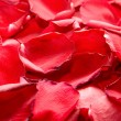 Red rose petals - Stock fotografie