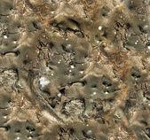 Mold texture — Stock Photo